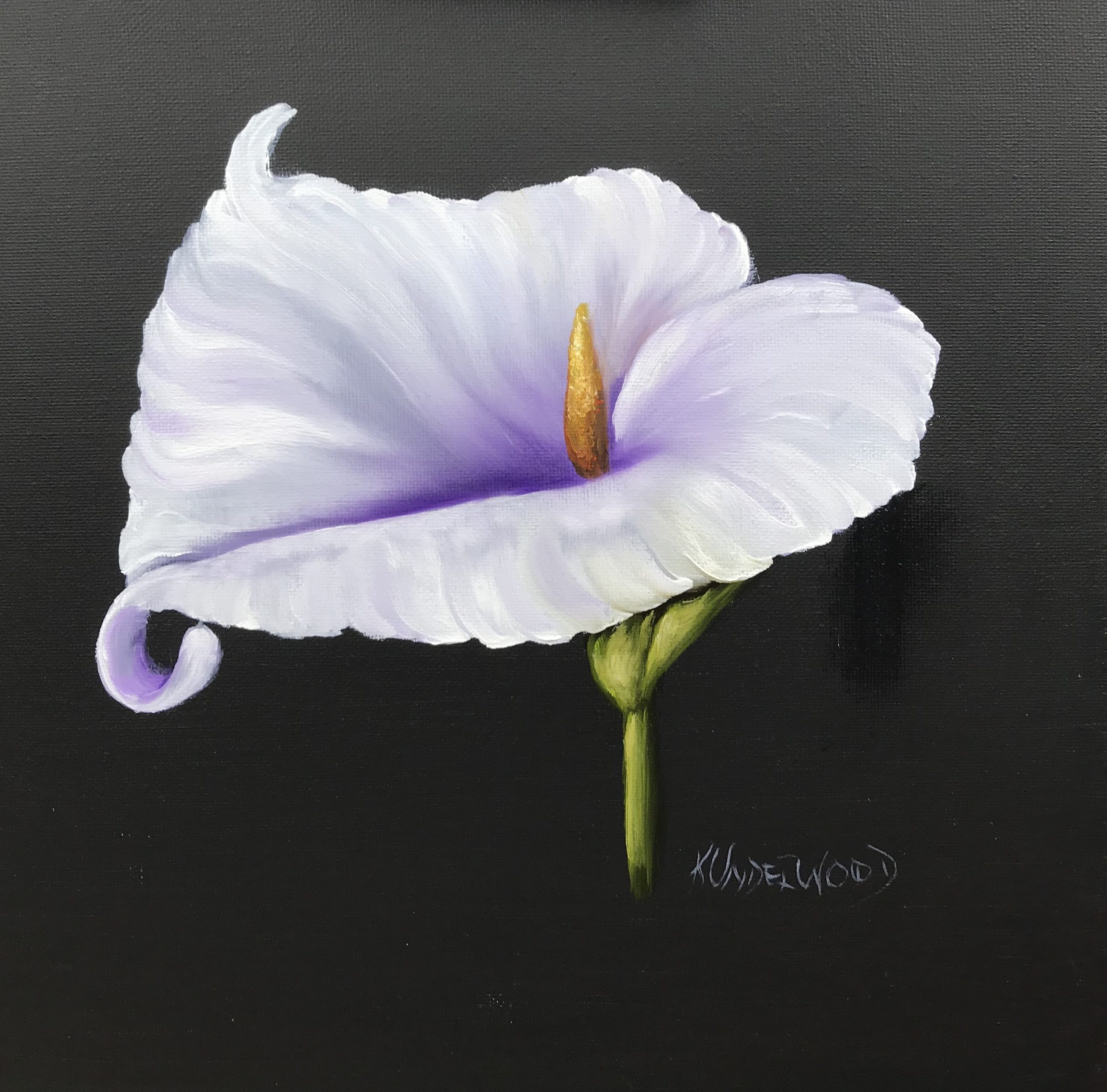 White Calla Lily (Oils)