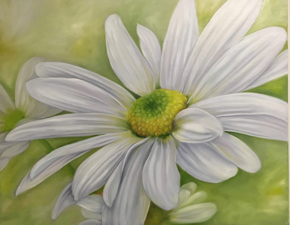 Large Dreamy Daisy (Oils)
